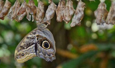 Nicht weggeschaut: Metamorphose der Reinkarnation