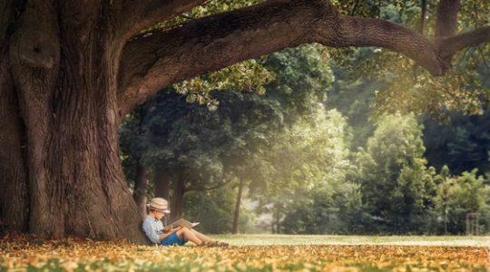 Junge liest unter einem Baum