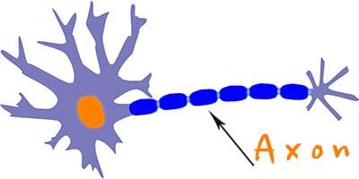 Neuron - Nervenzelle