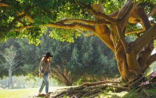 Körperbewusstsein - Werde ein Baum