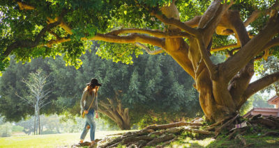 kraftvoller Baum