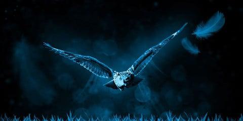 Eule bei Nacht