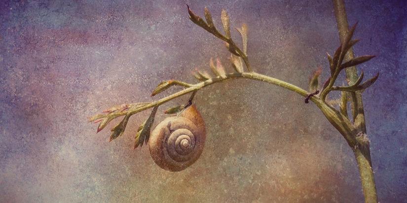 Spirale uraltes Symbol der Kelten