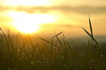 Sonnenaufgang im Gras