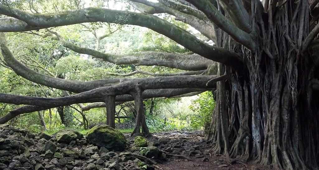 Nutze die Kraft des Baumes für eine tiefe Meditation