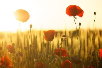 Tagundnachtgleiche - Blumenwiese