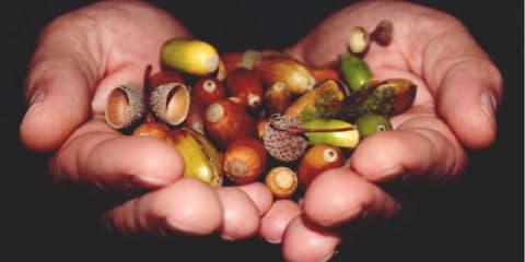 Mabon - Herbsttagundnachtgleiche - Gaben der Natur