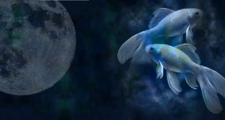 Vollmond in Fische