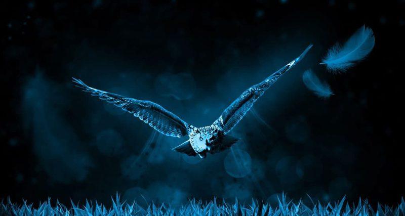 Siebente Rauhnacht Eulenflug