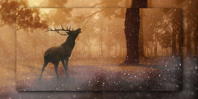 Hirsch im Winterwald