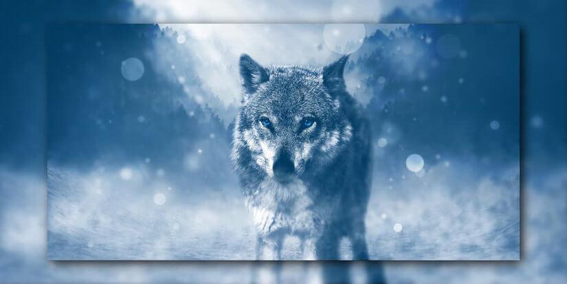 Der Rauhnachts Wolf