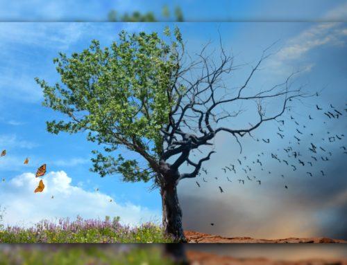 Alte Götter, Sabbat & Planeten – Woher kommen unsere Wochentage?