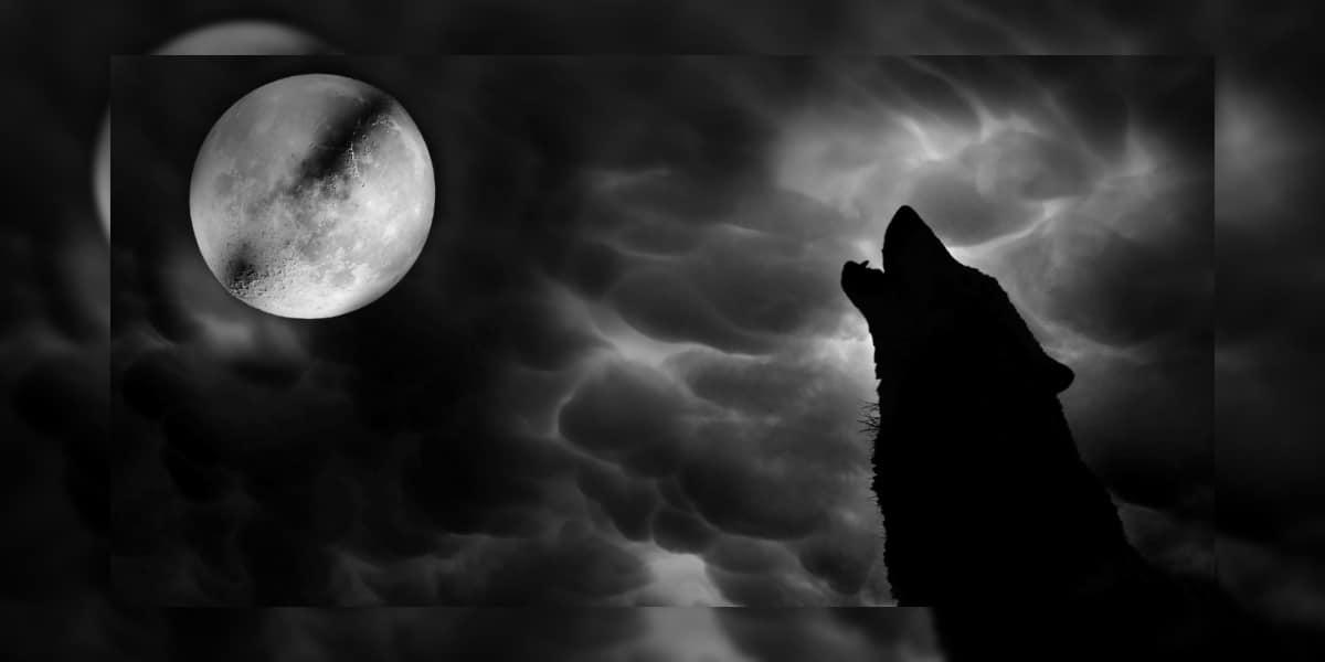 Wolfsmond Löwe 11.02.2017