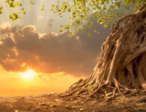 Prithivi Mudra – Bring deine Wurzeln in Harmonie