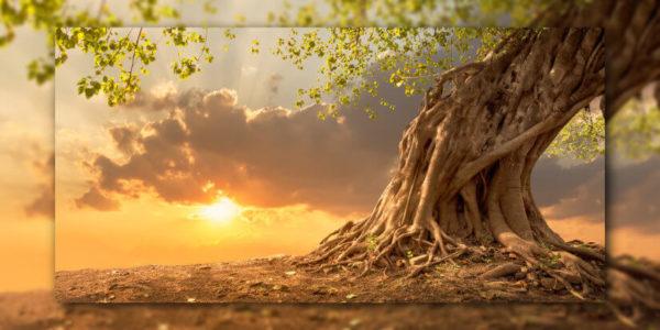 Prithivi Mudra Wurzeln finden, harmonisieren