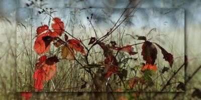 Neumond Herbst 2017 - Buntes Laub