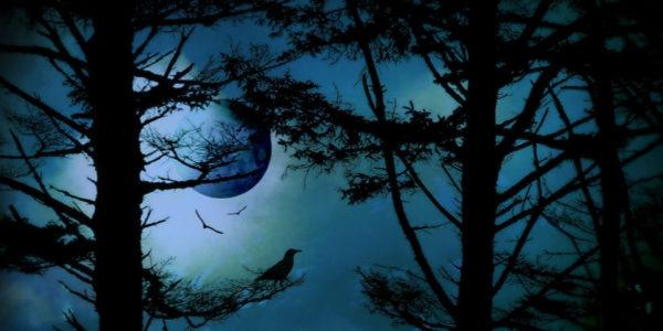 Vollmond Januar Löwe Mondfinsternis
