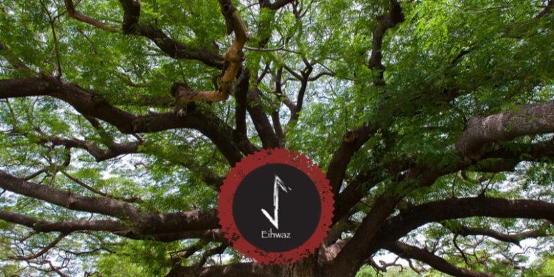 Rune Eihwaz - Lebensbaum Yggdrasil