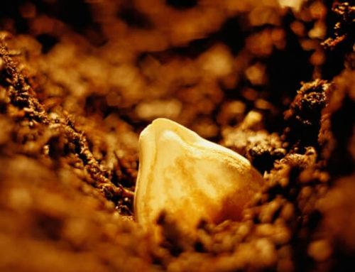 Berkana, die schützende Rune der Erdenmutter