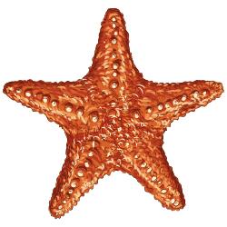 Pentagramm - Seestern